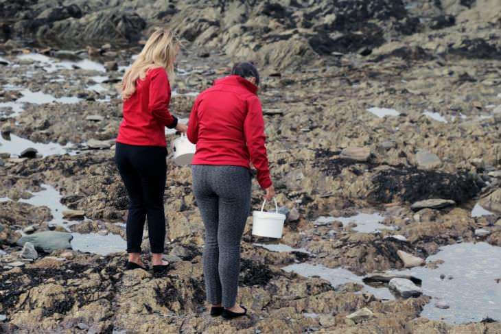 Rockpool research and discovery