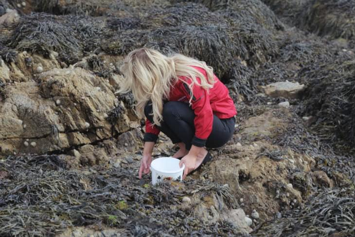 Looking for crabs, anemones and more