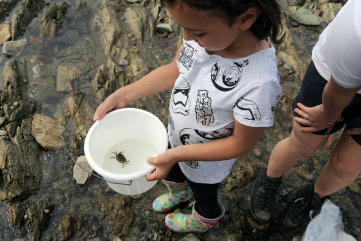 Rockpool conservation