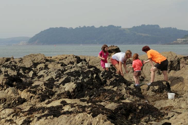 Rockpooling with visitors