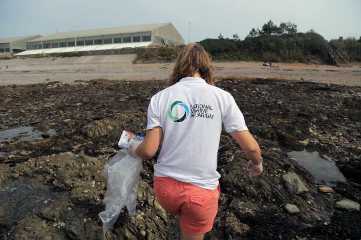 Litter collecting at the coast