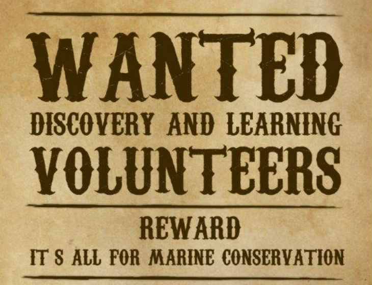 NMA_wanted volunteer poster stretch