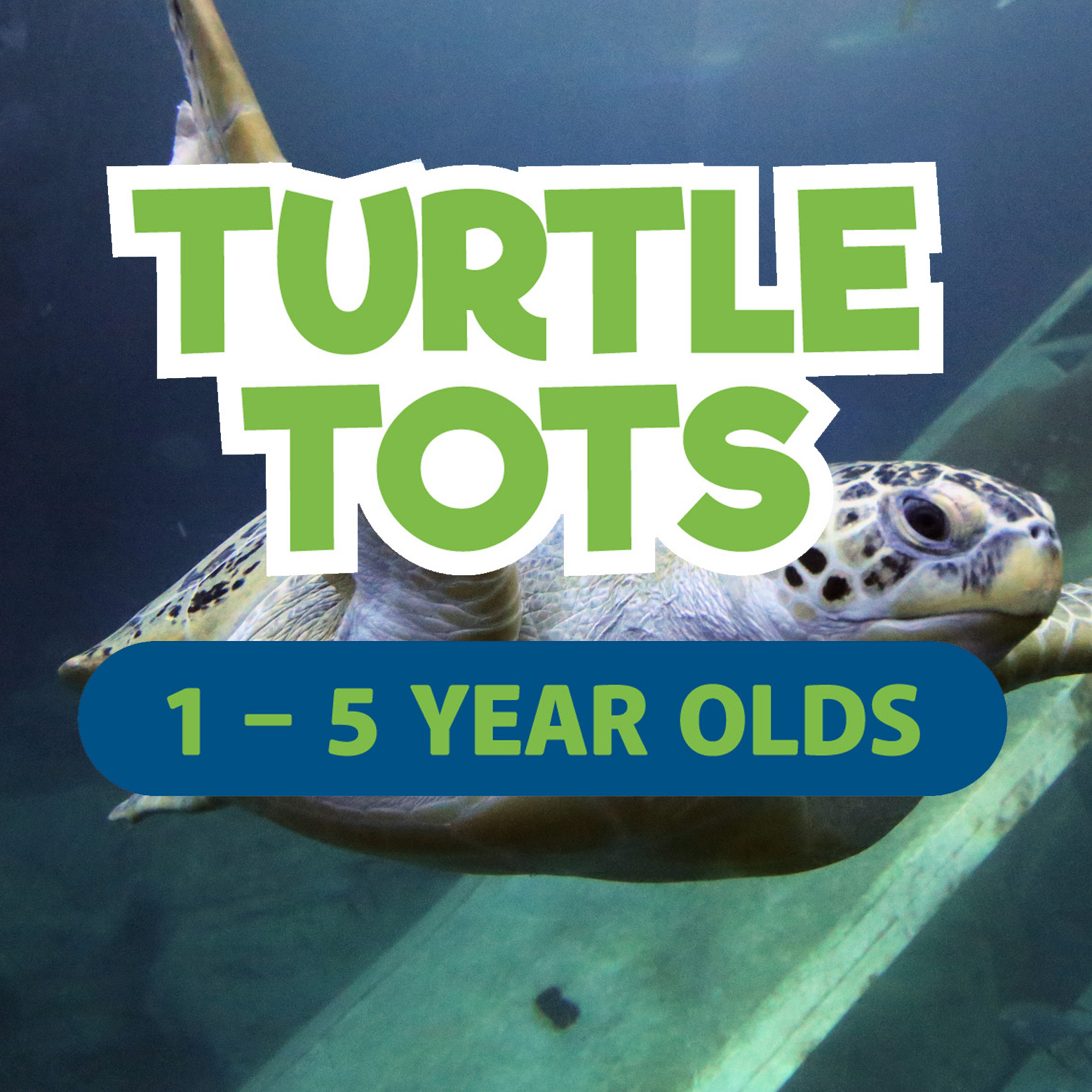 Turtle Tots Party | 3 - 5 year olds