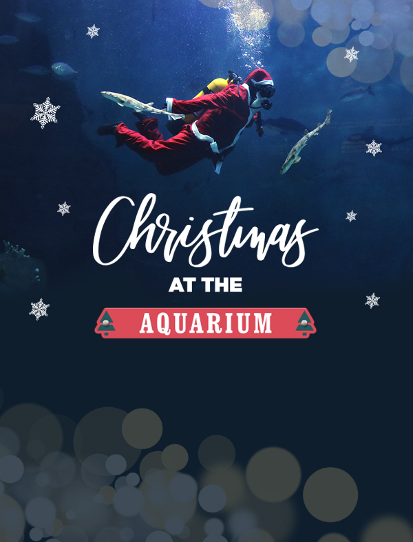 Christmas at the Aquarium on mobile