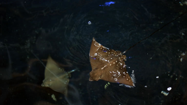 eagle-ray-blog