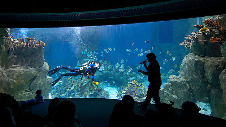 Work with us national marine aquarium for Construction aquarium