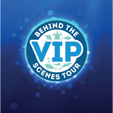 V.I.P Behind the Scenes Tours