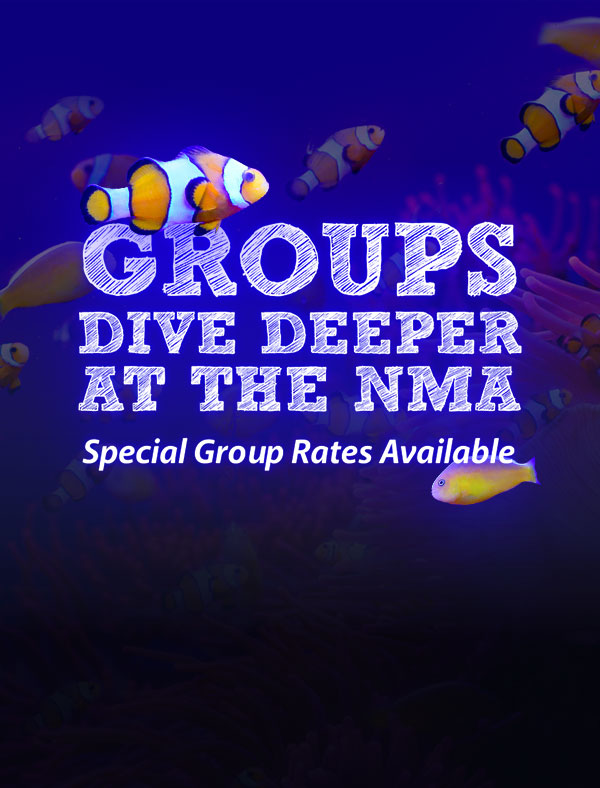 Groups dive deeper