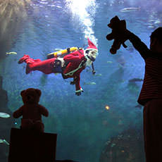 Christmas at the Aquarium