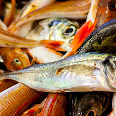 Sustainable fish for all