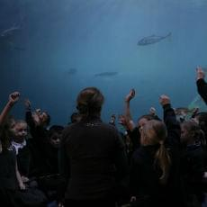 Key Stage 1 & 2 ocean education