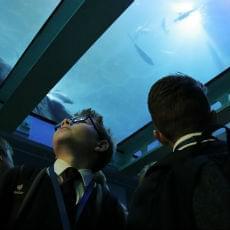 Key Stage 3 & 4 aquarium school trips