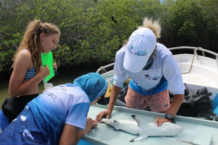 Baby-Shark-Sampling-Galapagos