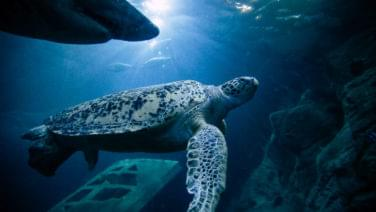 Friday-Green-Turtle