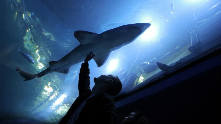 Family Day Out | Shark | National Marine Aquarium