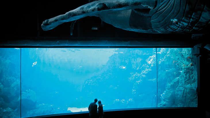Marine Aquarium Book Pdf