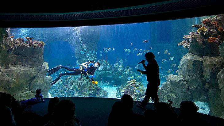 Work With Us National Marine Aquarium
