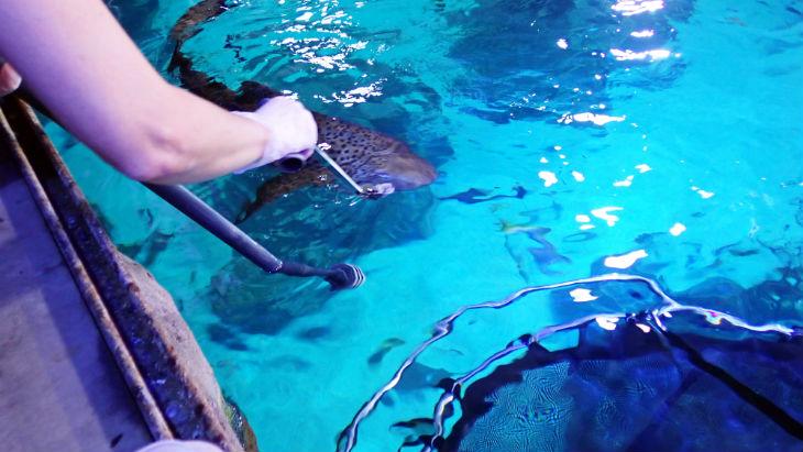 Zebra Shark | Aquarium | Shark feeding