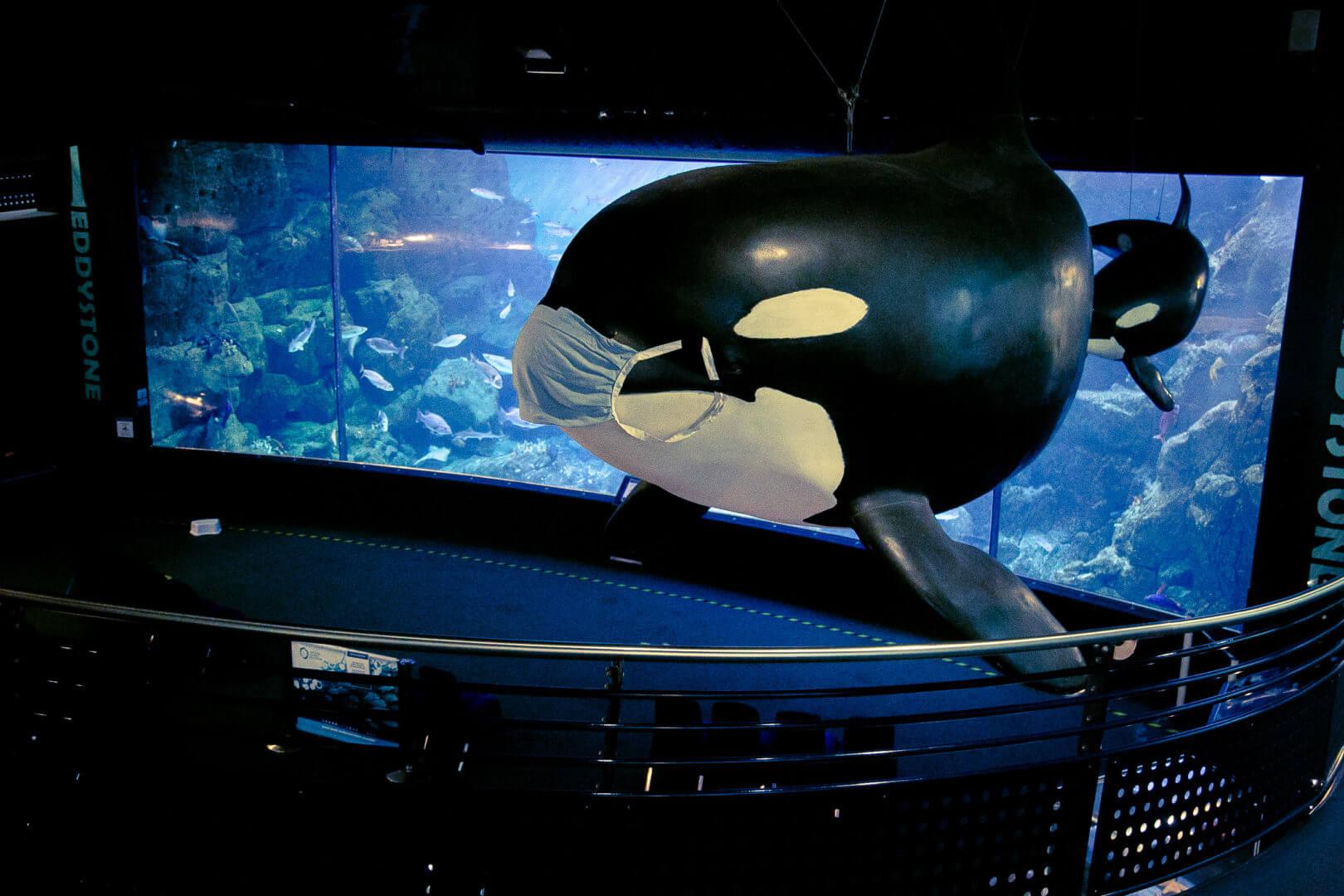 Inside National Marine Aquarium