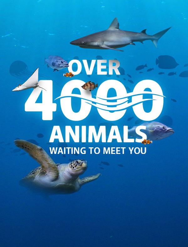 4000 Animals