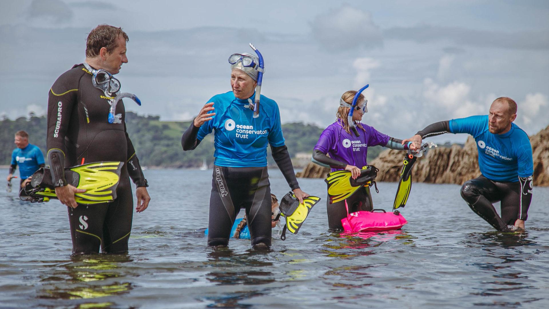 ocean snorkel safari in plymouth sound national marine park